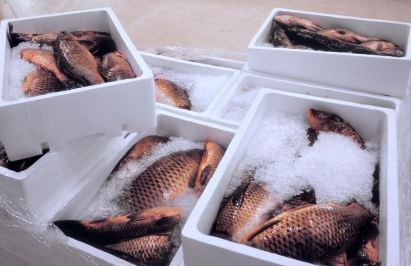 otvetstvennoe hranenie zamorozhennogo myasa ryby 2 - Ответственное хранение замороженного мяса и рыбы